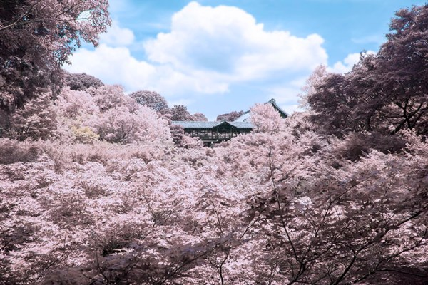 How to Create an Infrared Effect in Photoshop
