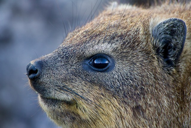 training-methods-kav-dadfar-wildlife-photography