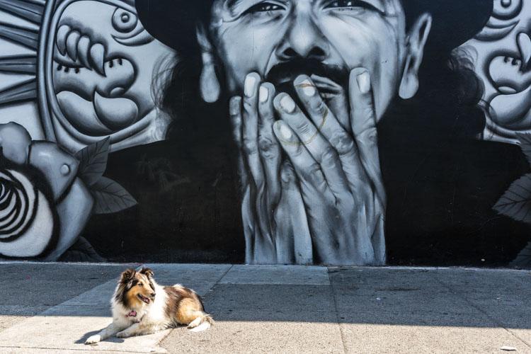 Take-Your-Dog-on-Photography-Walks.jpg