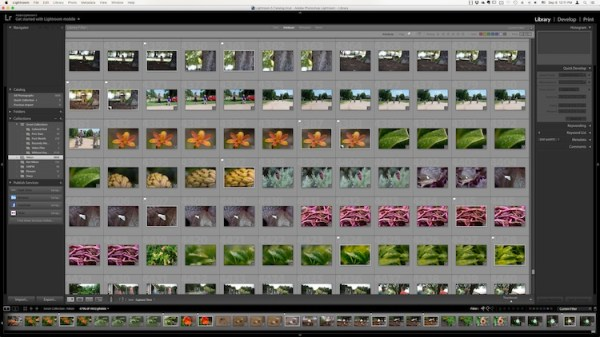 4 of the Most Important Elements of the Lightroom Library Module