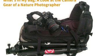 What's In My Bag: A Look at the Camera Gear of a Nature Photographer