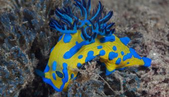 Tips for Doing Macro Underwater Photography
