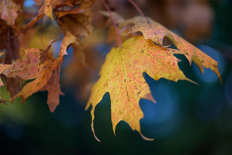 leaf-neat-image