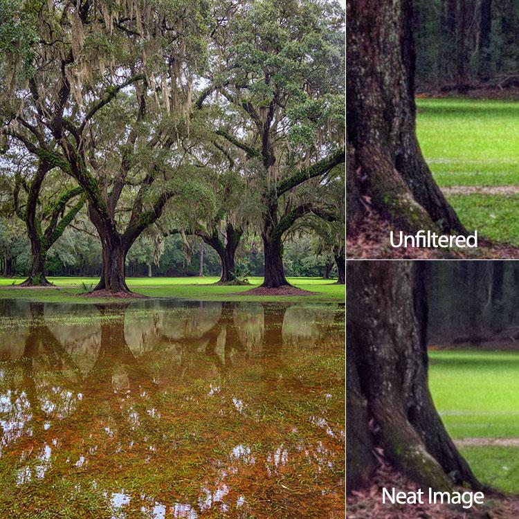 oaks-neat-image