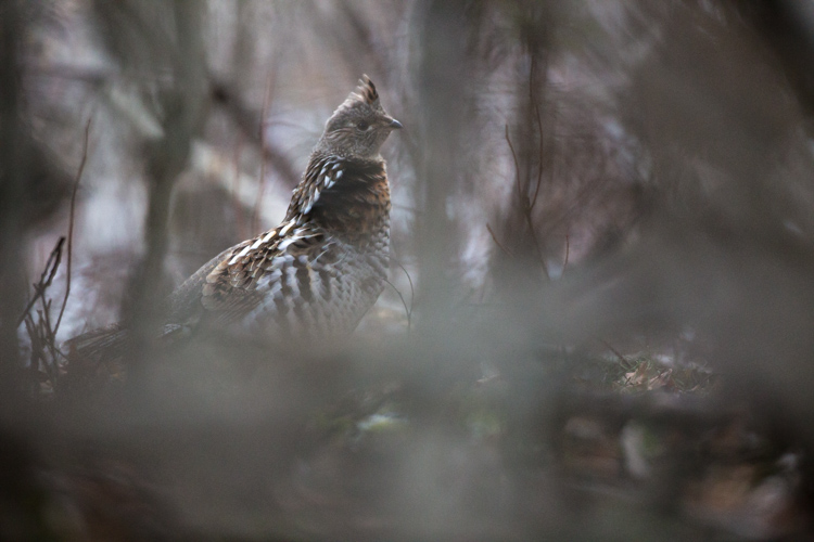 Five Most Essential Camera Settings aperture grouse