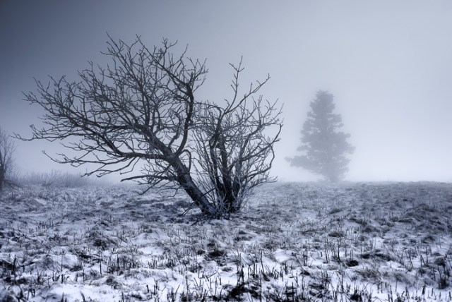 Winter Photography 4