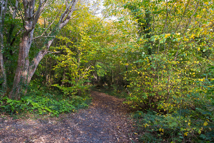 A wide shot of the woods during a recent walk.