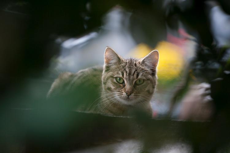 Tips photos cats 02