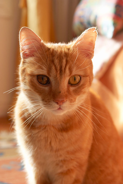 Tips photos cats 06
