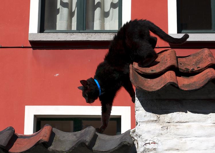 Tips photos cats 08