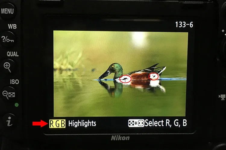 Bird Photography camera Settings for Beginners blinkies