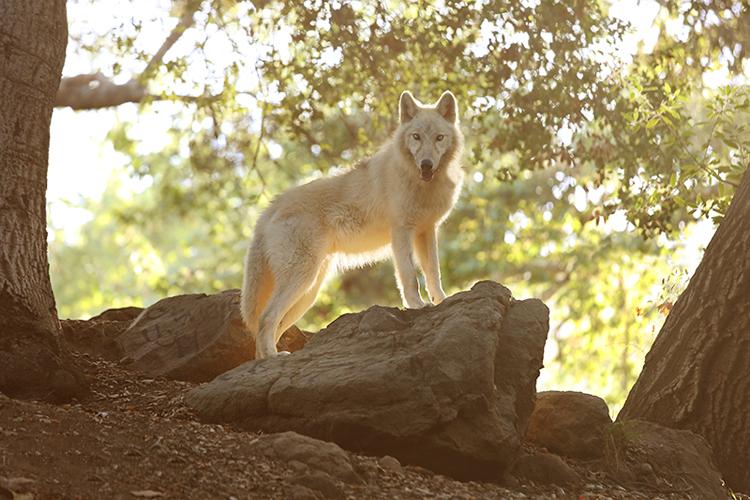 cachorro em uma rocha