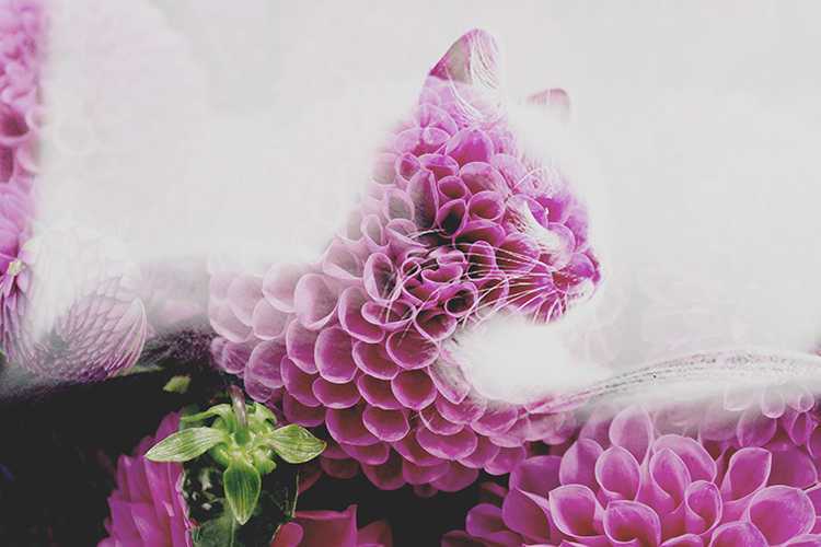 Using double exposures for sequences