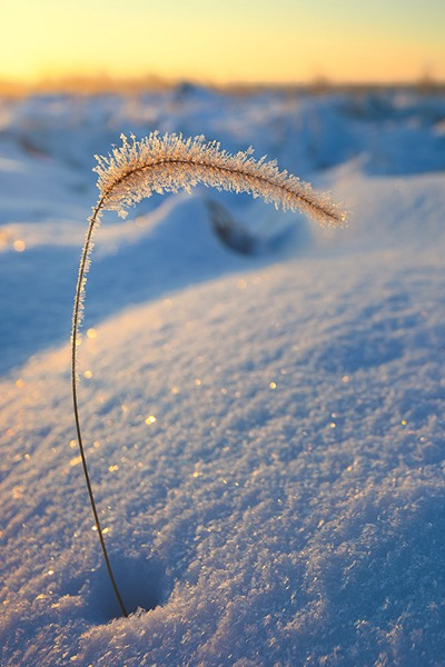 Tips for Winter Landscape Photography on the Prairie - Love The Little Details 1