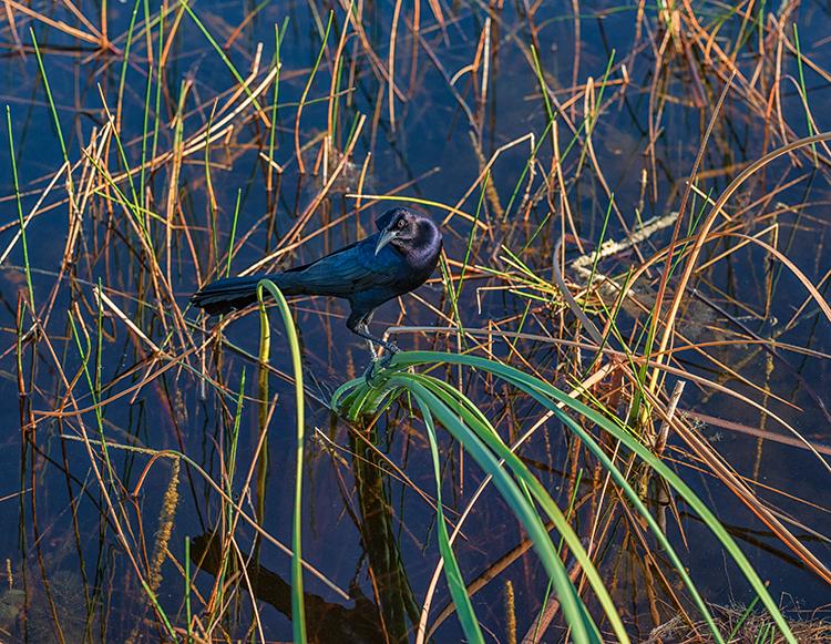 Wildlife Example Using Sigma 85mm f/1.4 Art