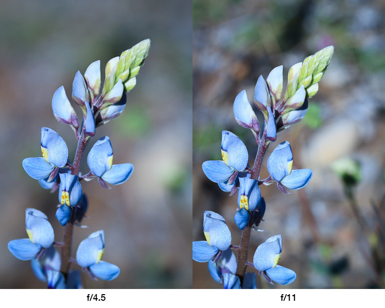 The difference between large and small apertures - Advanced Shooting Modes: What They Are and When to Use Them