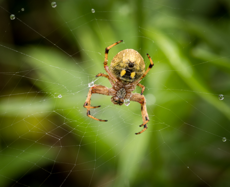 spider in a web
