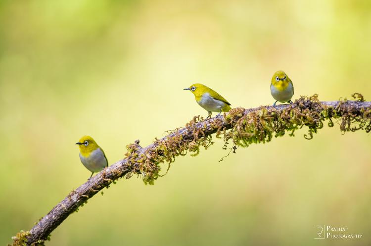 configurações de câmera de fotografia de pássaros