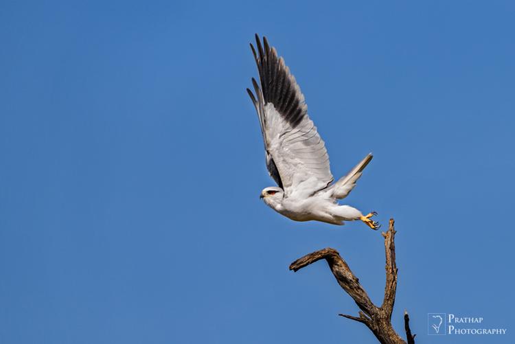 bird photography camera settings