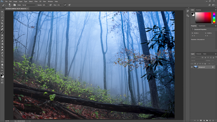 How to Create a Dream Forest in Adobe Photoshop