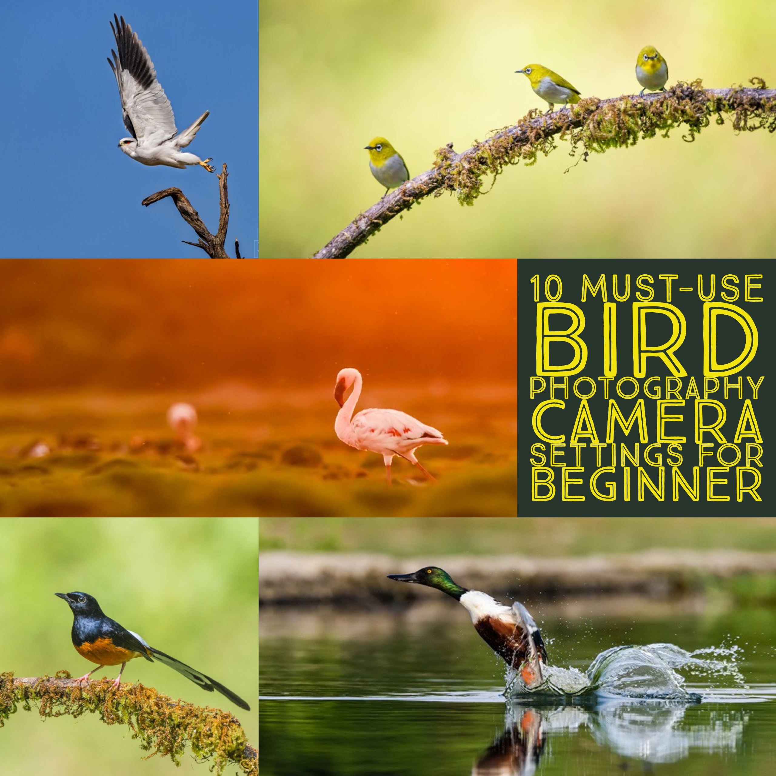 Bird Watching For Beginners Ebook
