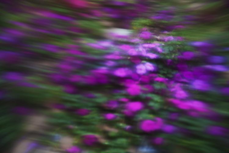 Weekly Photography Challenge – Purple