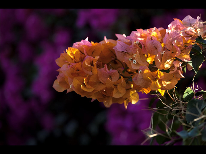 Image: Here is a contrasting background using complementary colors.