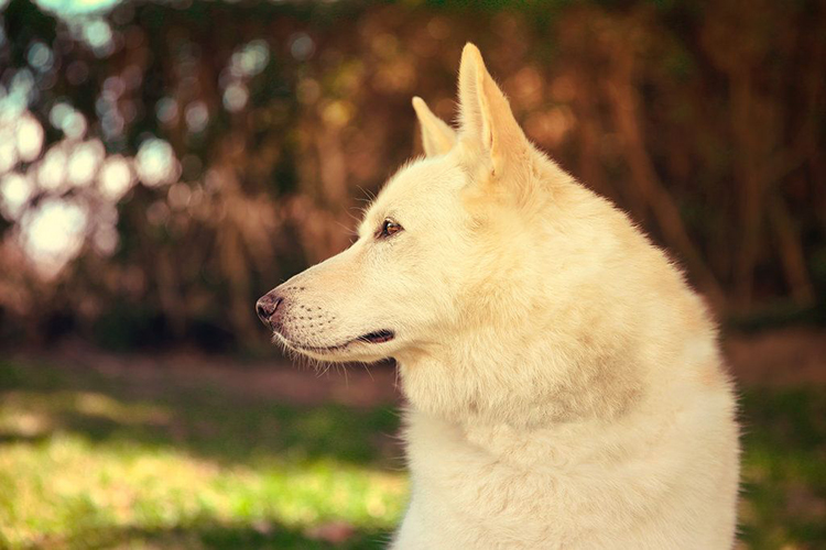 dog with beautiful bokeh