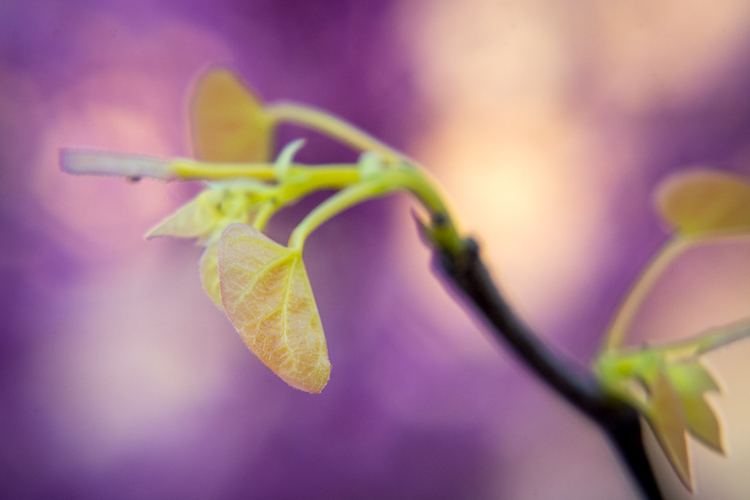 https://i1.wp.com/digital-photography-school.com/wp-content/uploads/2017/04/light-meter-purple-yellow-leaves.jpg?resize=750%2C500&ssl=1