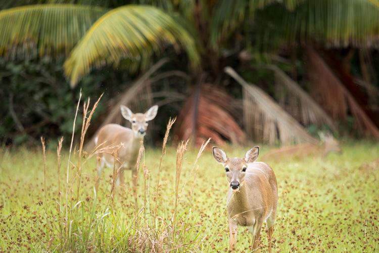 Low Impact Nature Photography - secret location