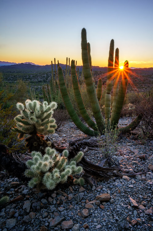 Organ Pipe Cactus National Monument, Arizona, by Anne McKinnell habit better photographer