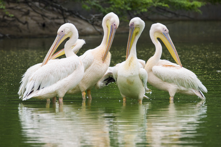 Wildlife photography telephoto lens 06