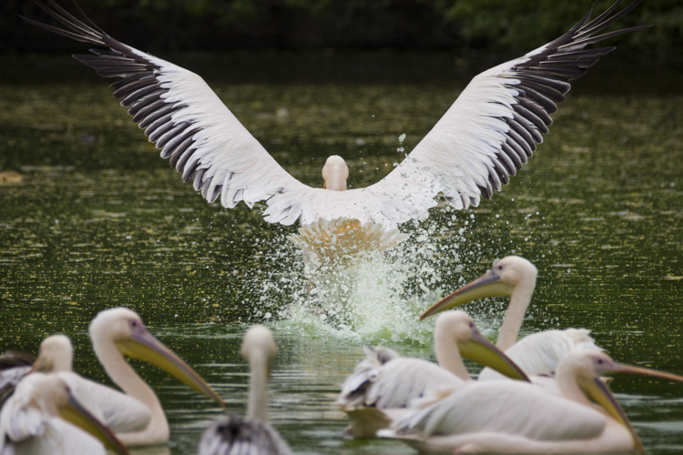 Wildlife photography telephoto lens 07