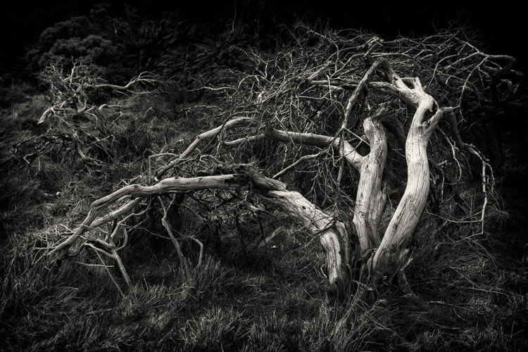 Tips for learning how to see in monochrome black and white tree