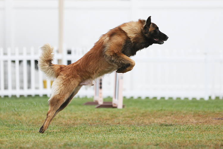 How to Photograph Dog Agility Events and Other Canine Sports