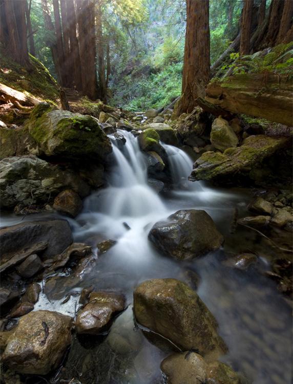 Redwood-Forest-Big-Sur