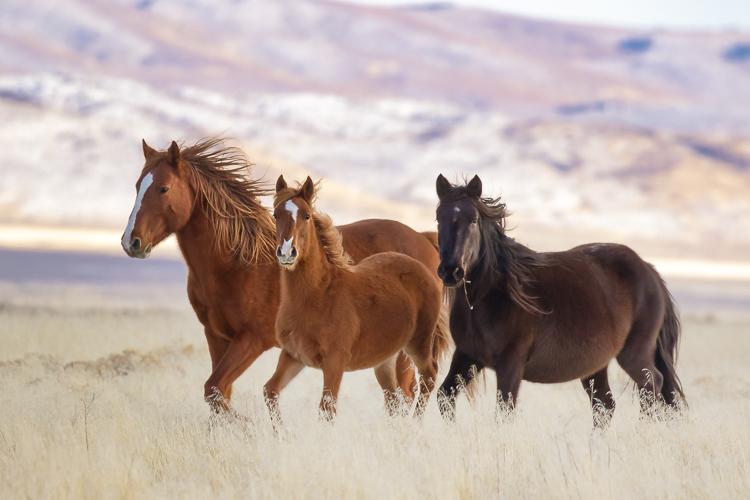 Luminar for beginners - wild horses