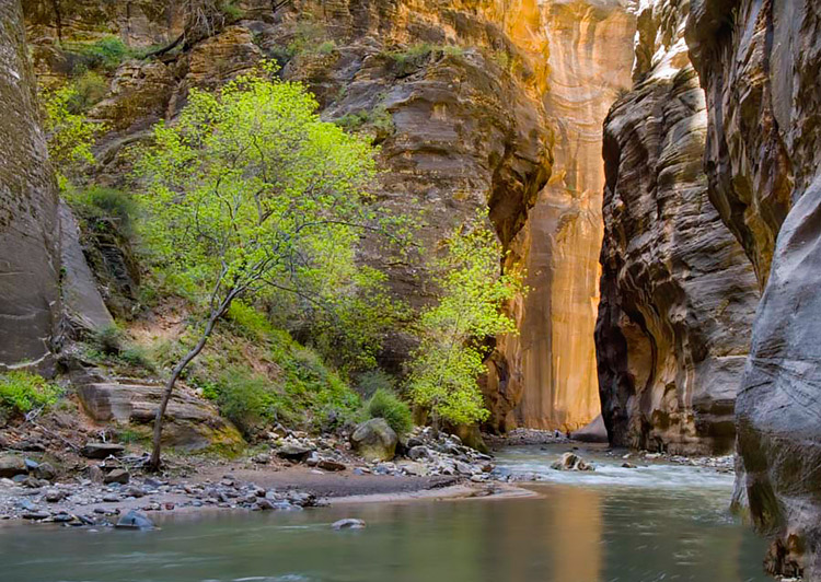 Zion-Narrows- Reflected Light Landscape Photography: It's All About the Light
