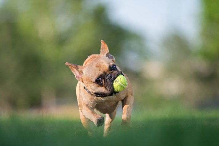How to Take Better Action Photos of Dogs