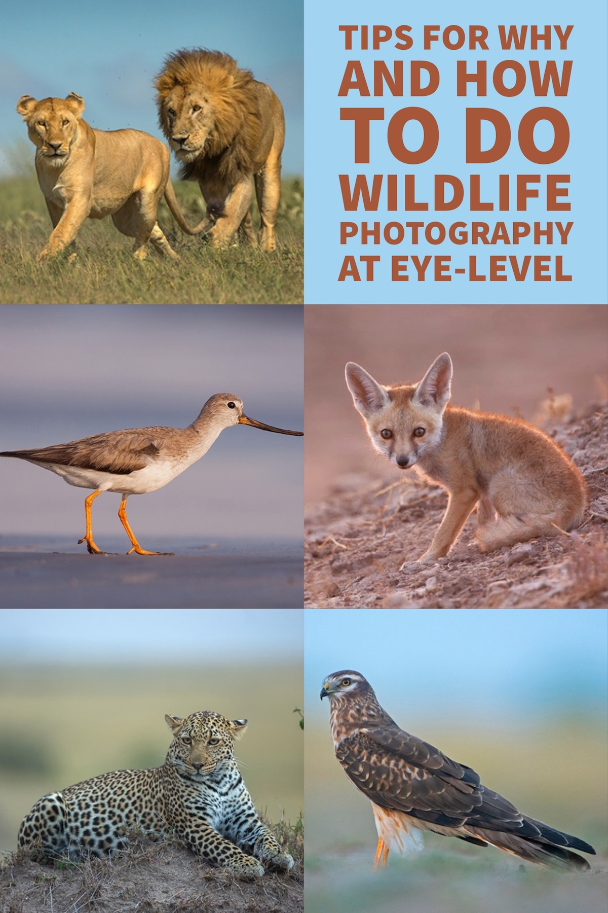 Why and How to do Wildlife Photography at Eye-Level