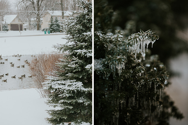 冰雨冬季的松树-如何在无趣的地方拍照