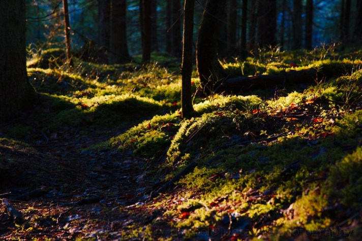 Forest photography 02