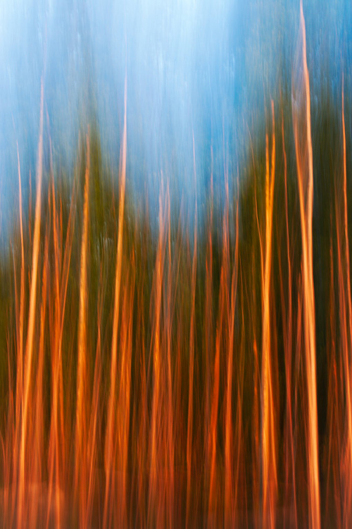 Forest photography 10