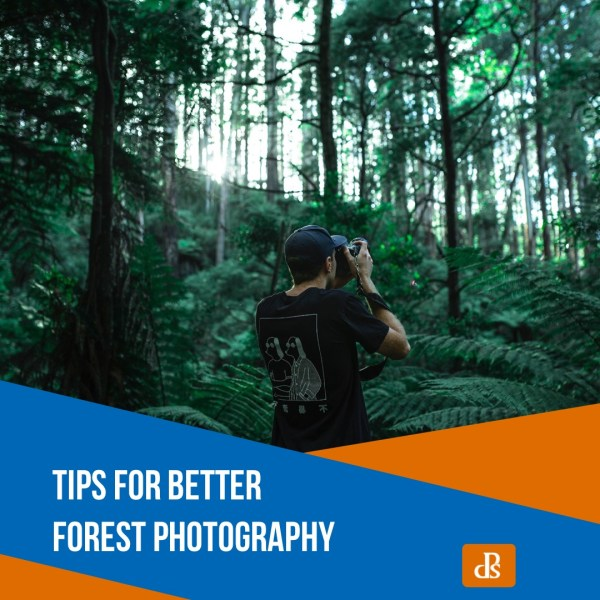Tips for Better Forest Photography