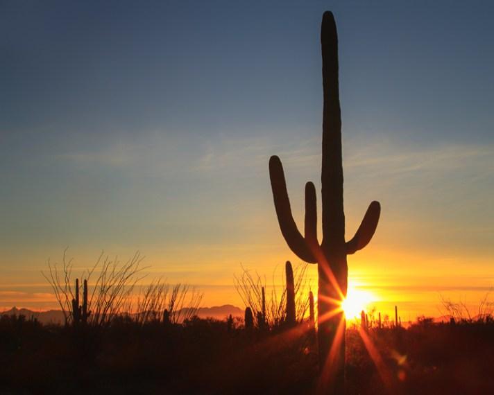 仙人掌在亚利桑那州图森山州立公园的剪影,安妮·麦金奈尔(Anne McKinnell)