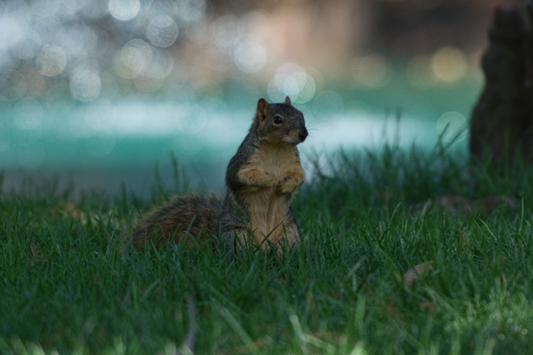 https://i1.wp.com/digital-photography-school.com/wp-content/uploads/2017/10/squirrel-fountain-original-1.jpeg?resize=750%2C500&ssl=1