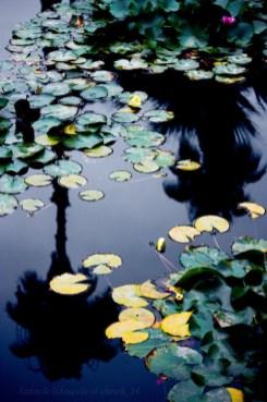 03b-reflection-photography-tips.jpg