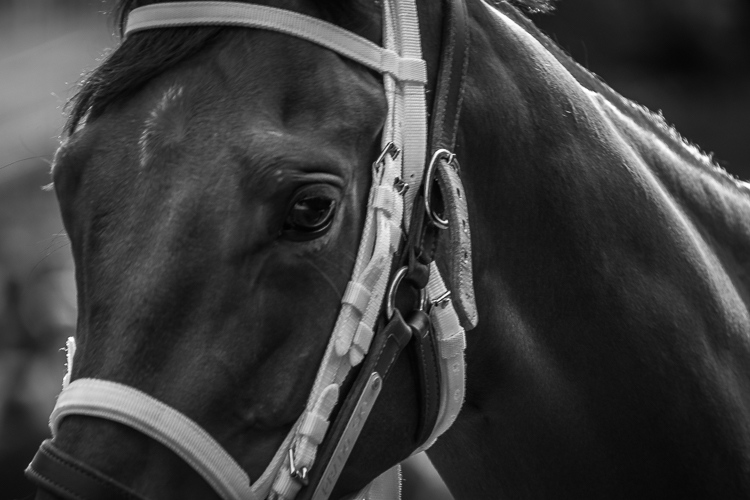 Tamron 18-400mm - racehorse portrait