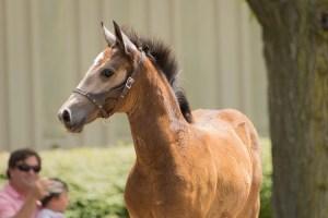 Tamron 18-400 Lipizzan Foal