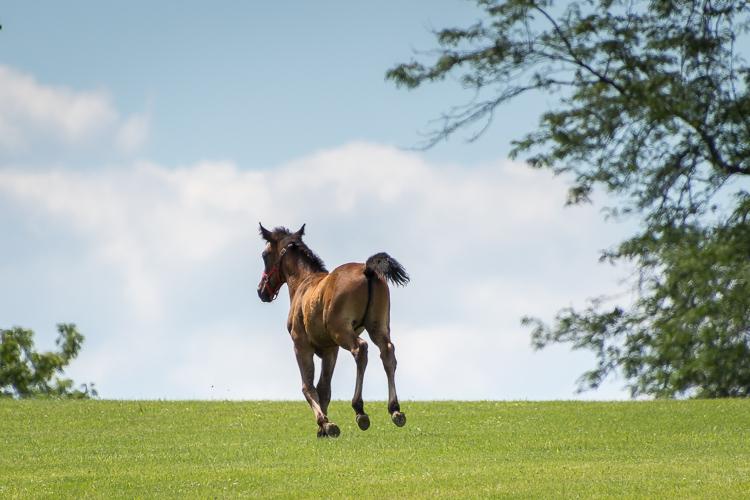 Tamron 18-400mm lens running foal